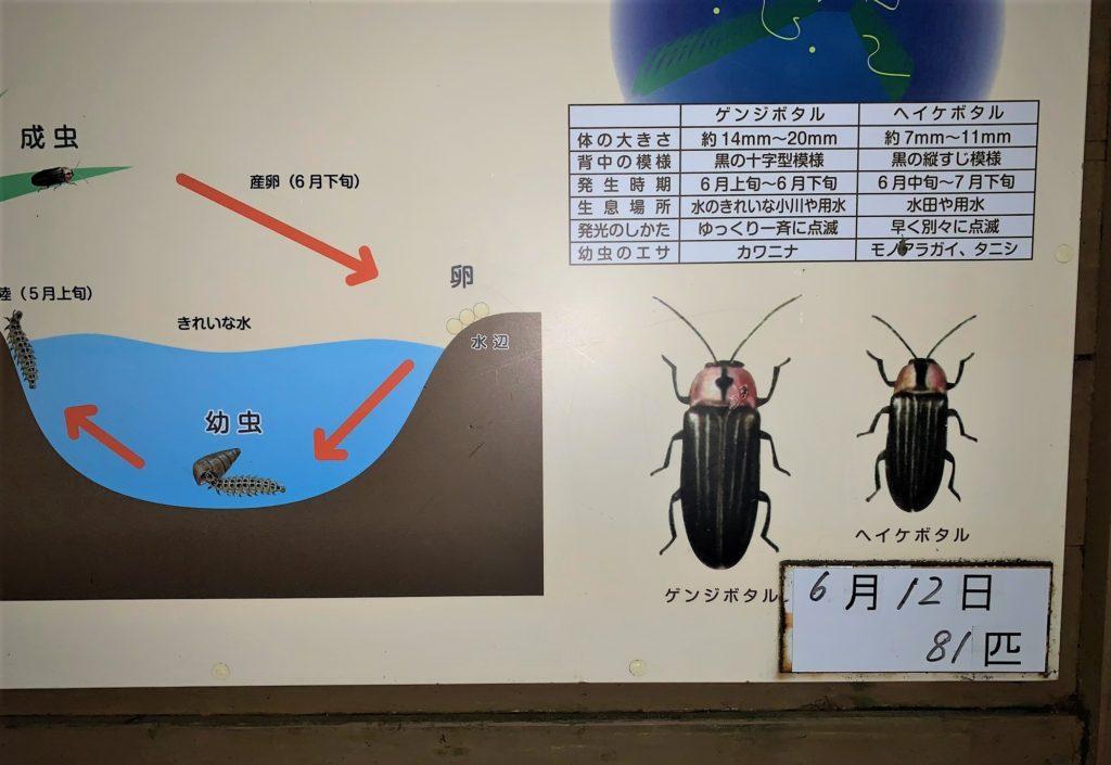 石川県金沢のホタルの観賞時期・時間帯・おすすめスポット2020 ホタルの確認数2