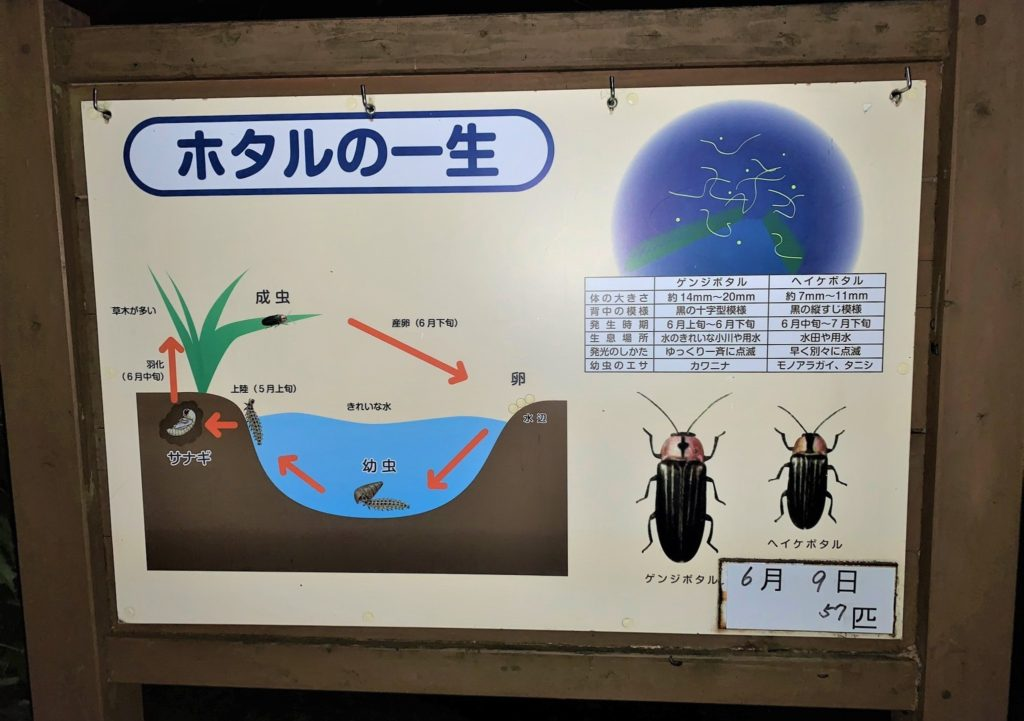 石川県金沢のホタルの観賞時期・時間帯・おすすめスポット2020 ホタルの確認数1