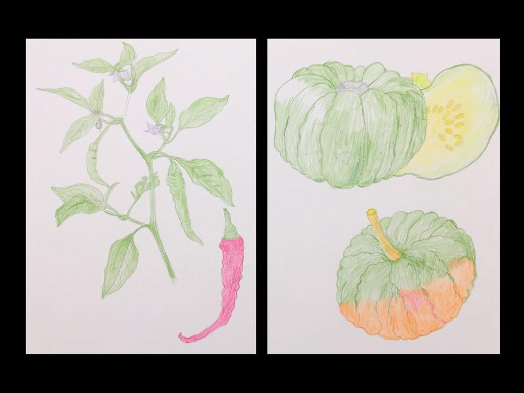 【初心者向け】大人の塗り絵の種類から塗り方やコツまでご紹介! 「大人の塗り絵」【野菜畑の花と実編】02