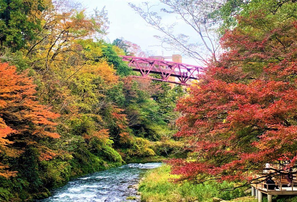 【紅葉】石川・金沢兼六園の見頃・混雑時間・駐車場やライトアップ2019について 鶴仙渓とあやとりはし