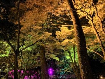 【紅葉】石川・金沢兼六園の見頃・混雑時間・駐車場やライトアップ2019について あやとりはしのたもとの樹木ライトアップ02