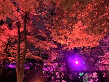 【紅葉】石川・金沢兼六園の見頃・混雑時間・駐車場やライトアップ2019について あやとりはしのたもとの樹木ライトアップ01