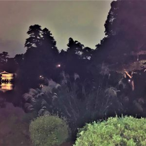 【紅葉】石川・金沢兼六園の見頃・混雑時間・駐車場やライトアップ2019について 中秋の名月観賞の夕べ 兼六園ことじ灯籠付近のススキ