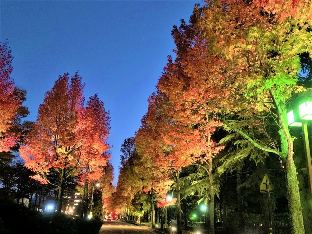 【紅葉】石川・金沢兼六園の見頃・混雑時間・駐車場やライトアップ2021について アメリカ楓通りライトアップ