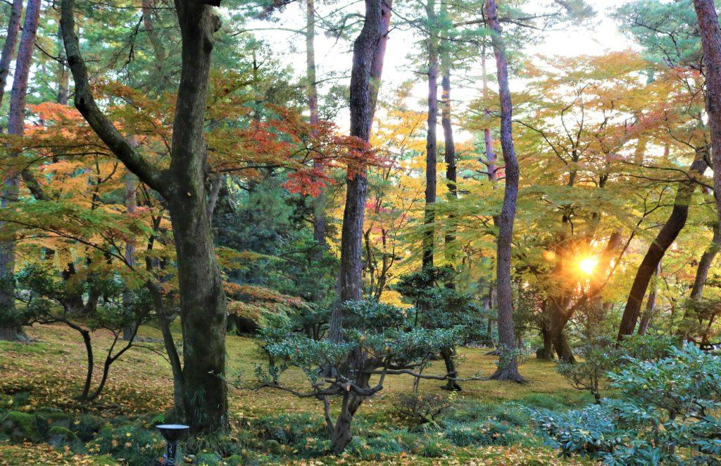【紅葉】石川・金沢兼六園の見頃・混雑時間・駐車場やライトアップ2021について 樹木の間から笑顔でポーズを決める西日さん