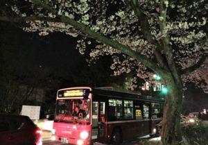 【2020春】兼六園の桜の見頃・開花予想・人気スポット10ヵ所や花見ライトアップ 金沢ライトアップバス