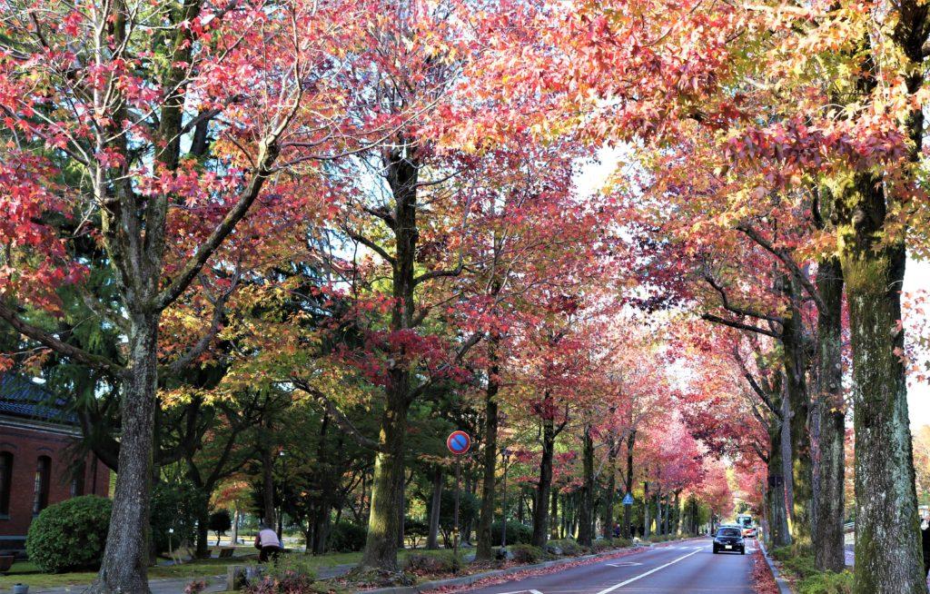【紅葉】石川・金沢兼六園の見頃・混雑時間・駐車場やライトアップ2019について アメリカ楓通り