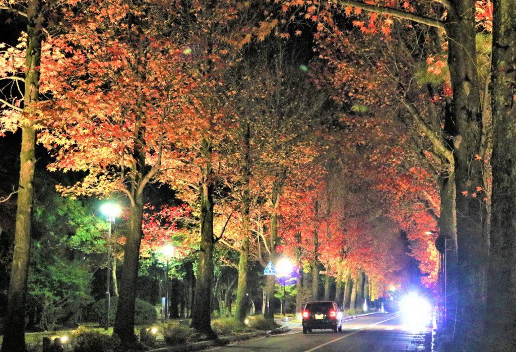 【紅葉】石川・金沢兼六園の見頃・混雑時間・駐車場やライトアップ2019について アメリカ楓通りライトアップ