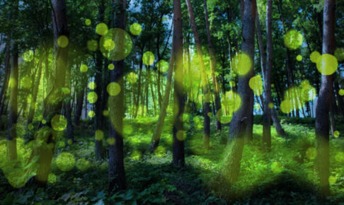 石川県金沢のホタルの観賞時期・時間帯・おすすめスポット2018 タイトル画像