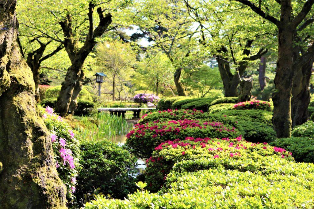 【2021春】兼六園の桜の見頃・開花予想・人気スポット10ヵ所や花見ライトアップ 板橋付近 兼六園菊桜が満開の頃