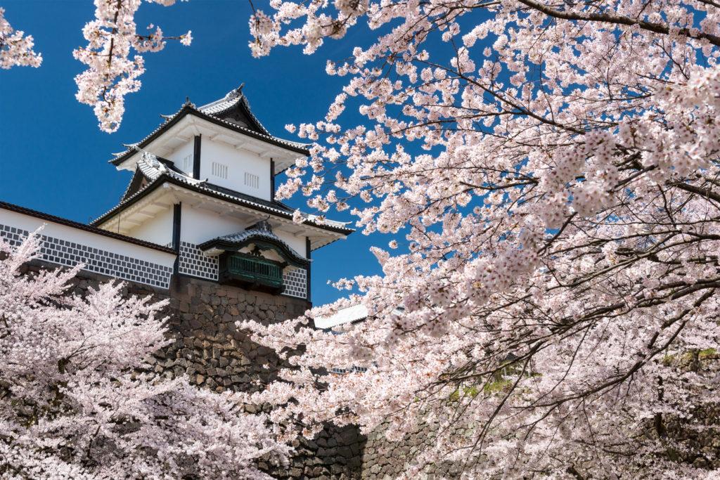 【2019春】兼六園の桜の見頃・開花予想・人気スポットや花見ライトアップ 兼六園 桜満開