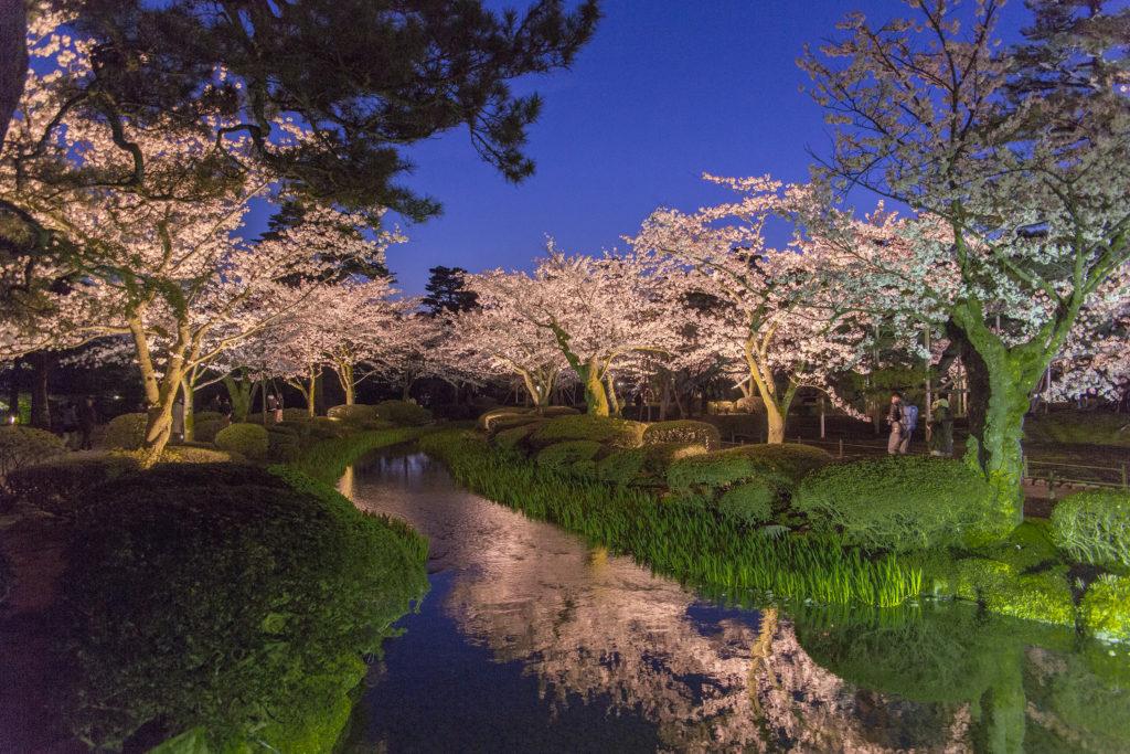 【2019春】兼六園の桜の見頃・開花予想・人気スポットや花見ライトアップ 桜ライトアップ