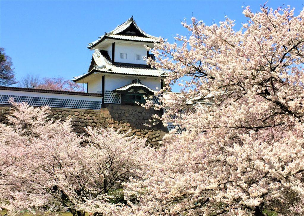 【2020春】兼六園の桜の見頃・開花予想・人気スポット10ヵ所や花見ライトアップ 兼六園の桜の見頃の時期