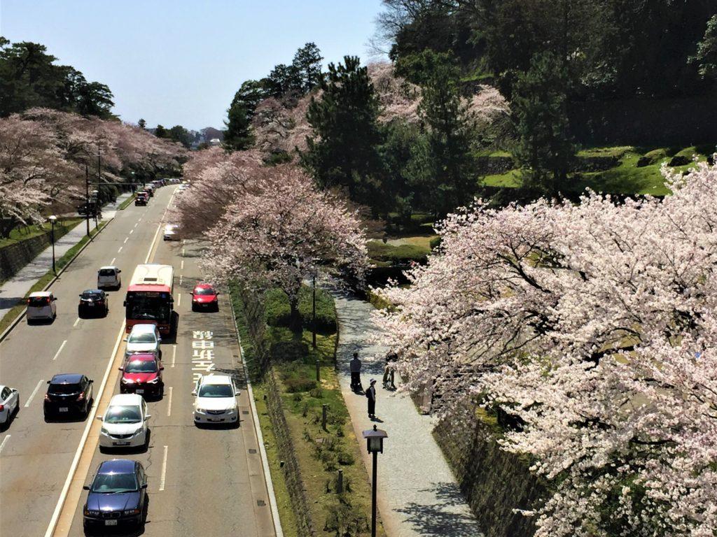 【2019春】兼六園の桜の見頃・開花予想・人気スポット10ヵ所や花見ライトアップ 2019年4月6日 石川橋からの眺め