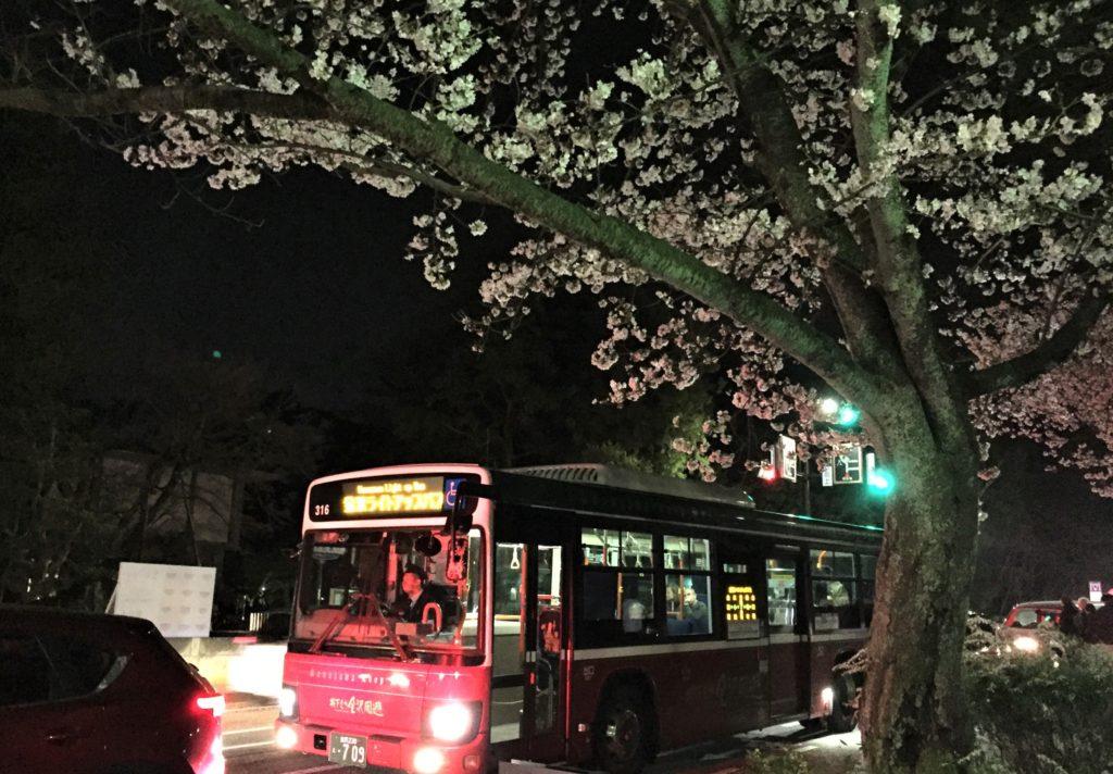 【2019春】兼六園の桜の見頃・開花予想・人気スポット10ヵ所や花見ライトアップ 2019年4月6日 ライトアップバス