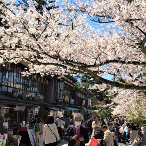 【2020春】兼六園の桜の見頃・開花予想・人気スポット10ヵ所や花見ライトアップ 兼六園 江戸町通り