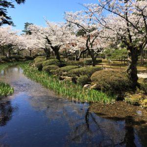 【2020春】兼六園の桜の見頃・開花予想・人気スポット10ヵ所や花見ライトアップ 花見橋からの眺め