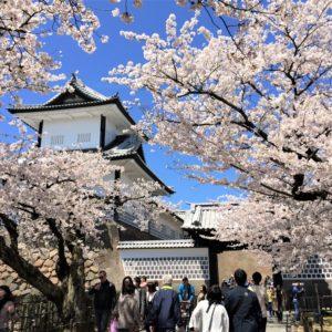 【2020春】兼六園の桜の見頃・開花予想・人気スポット10ヵ所や花見ライトアップ 2019年4月6日 石川門と桜