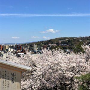 【2020春】兼六園の桜の見頃・開花予想・人気スポット10ヵ所や花見ライトアップ 兼六園眺望台からの眺め
