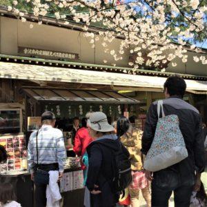 【2020春】兼六園の桜の見頃・開花予想・人気スポット10ヵ所や花見ライトアップ 茶店