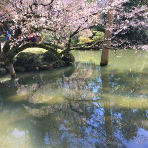 【2020春】兼六園の桜の見頃・開花予想・人気スポット10ヵ所や花見ライトアップ 瓢池 逆さ桜01
