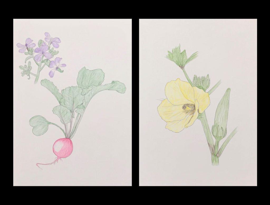 大人の塗り絵の作品集!82歳おばあちゃんがハマった塗り絵をご紹介 やさしい大人の塗り絵【野菜と花編】02