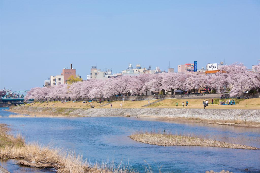 【2020春】兼六園の桜の見頃・開花予想・人気スポット10ヵ所や花見ライトアップ 犀川緑地 桜並木