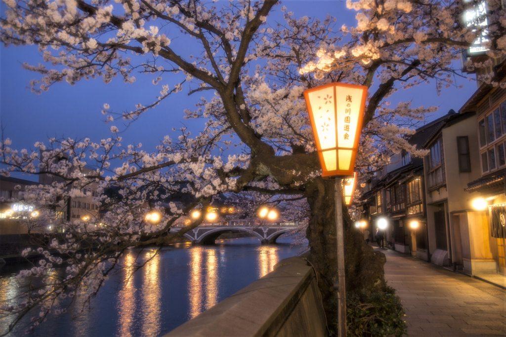 【2020春】兼六園の桜の見頃・開花予想・人気スポット10ヵ所や花見ライトアップ 浅野川 桜並木ライトアップ