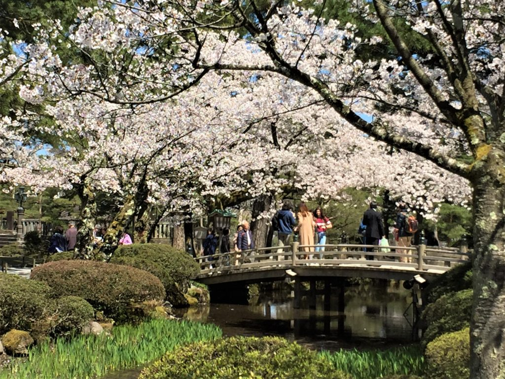 【2020春】兼六園の桜の見頃・開花予想・人気スポット10ヵ所や花見ライトアップ 4月13日 兼六園:花見橋周辺01