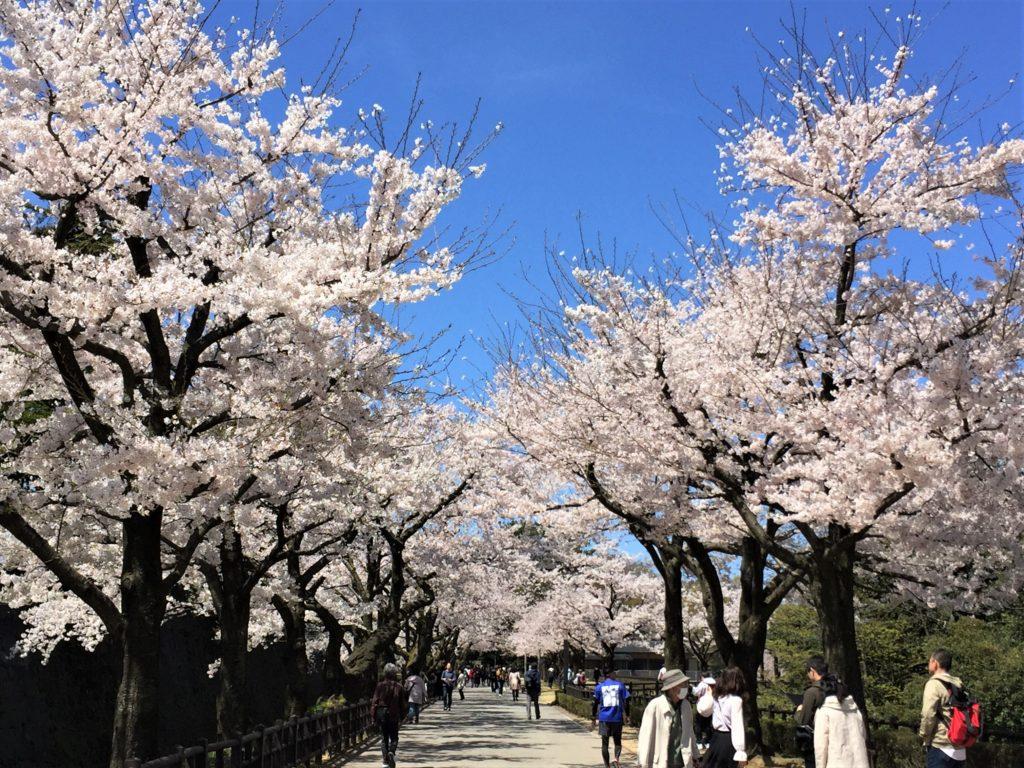【2020春】兼六園の桜の見頃・開花予想・人気スポット10ヵ所や花見ライトアップ 4月13日 金沢城公園01