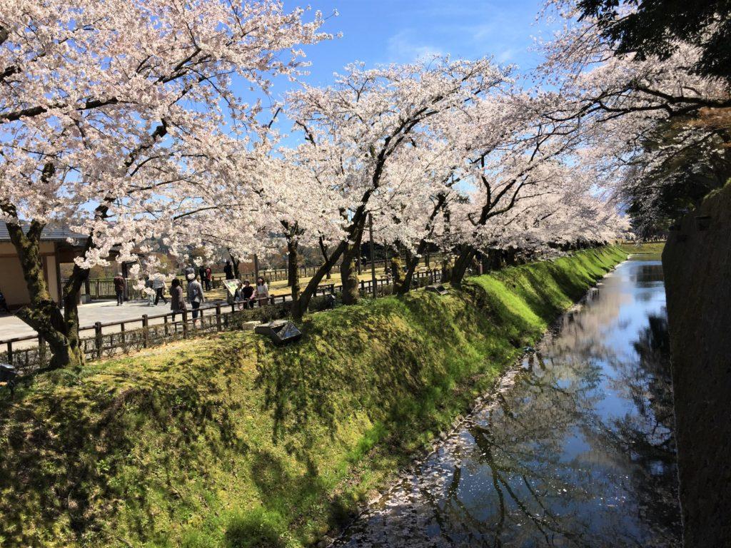 【2020春】兼六園の桜の見頃・開花予想・人気スポット10ヵ所や花見ライトアップ 4月13日 金沢城公園02