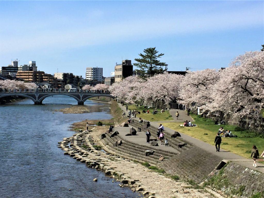 【2020春】兼六園の桜の見頃・開花予想・人気スポット10ヵ所や花見ライトアップ 4月13日 浅野川大橋周辺