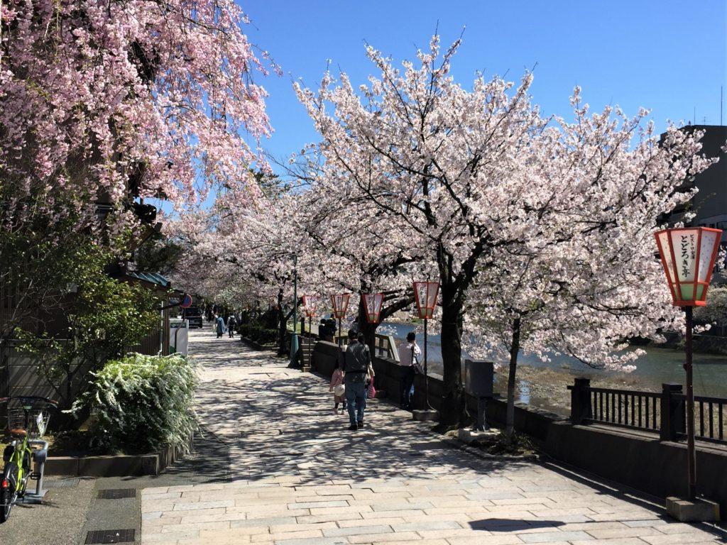 【2020春】兼六園の桜の見頃・開花予想・人気スポット10ヵ所や花見ライトアップ 4月13日 ひがし茶屋街