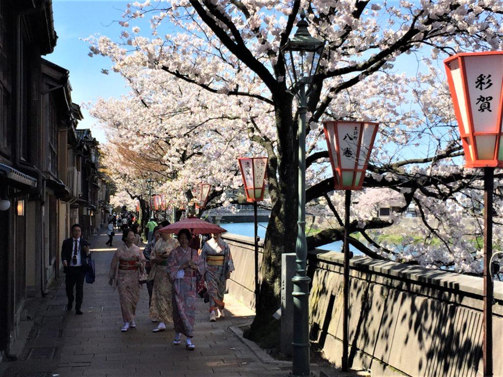 【2020春】兼六園の桜の見頃・開花予想・人気スポット10ヵ所や花見ライトアップ 4月13日 主計町茶屋街