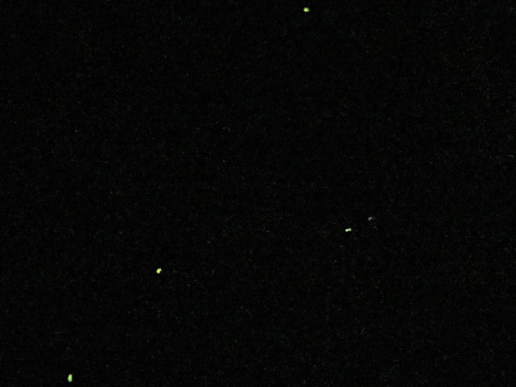 石川県金沢のホタルの観賞時期・時間帯・おすすめスポット2020 白鳥路ホタル観賞の夕べで観賞したホタル(飛翔)