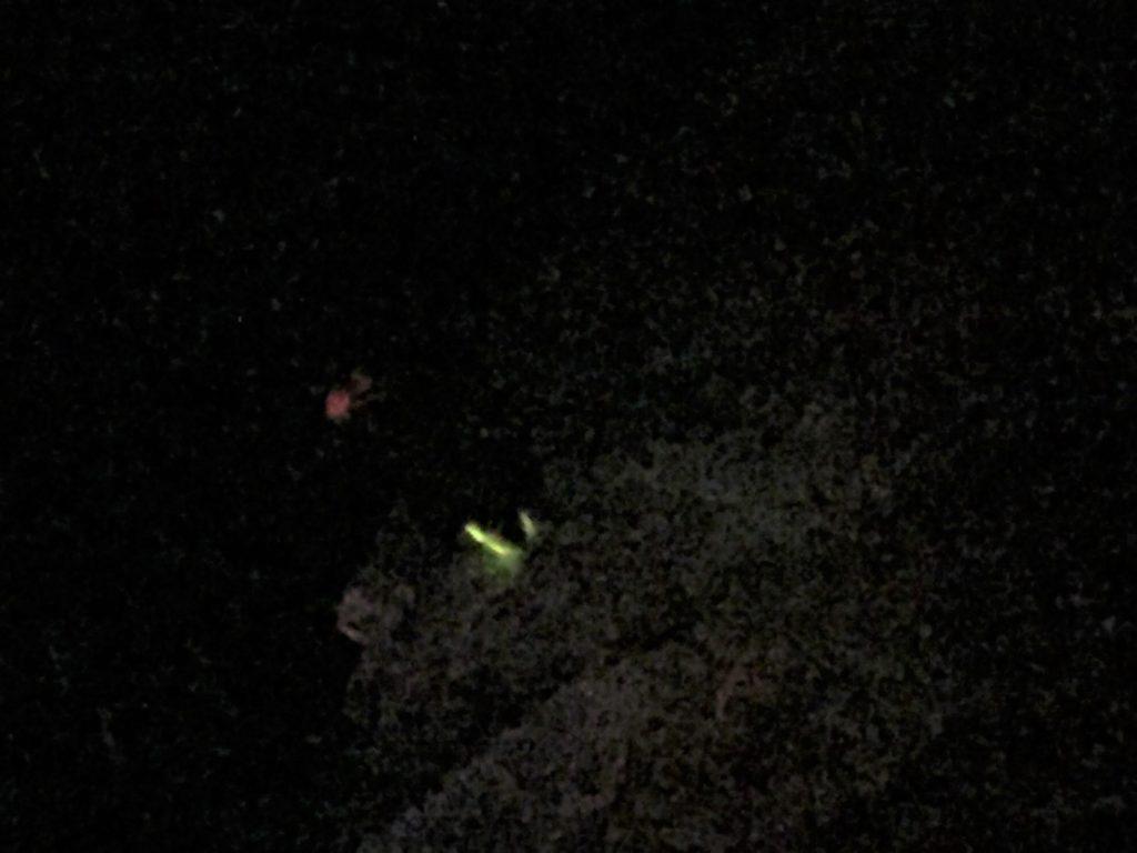 石川県金沢のホタルの観賞時期・時間帯・おすすめスポット2020 白鳥路ホタル観賞の夕べで観賞したホタル(静止)
