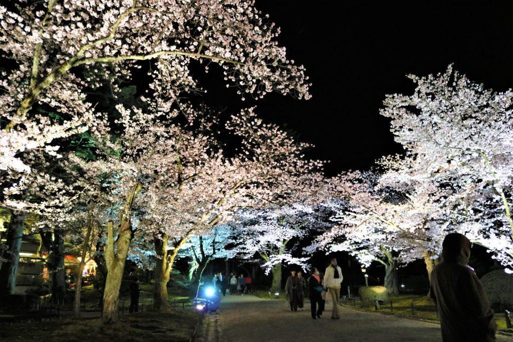 【2020春】兼六園の桜の見頃・開花予想・人気スポット10ヵ所や花見ライトアップ 桜ヶ岡ライトアップ