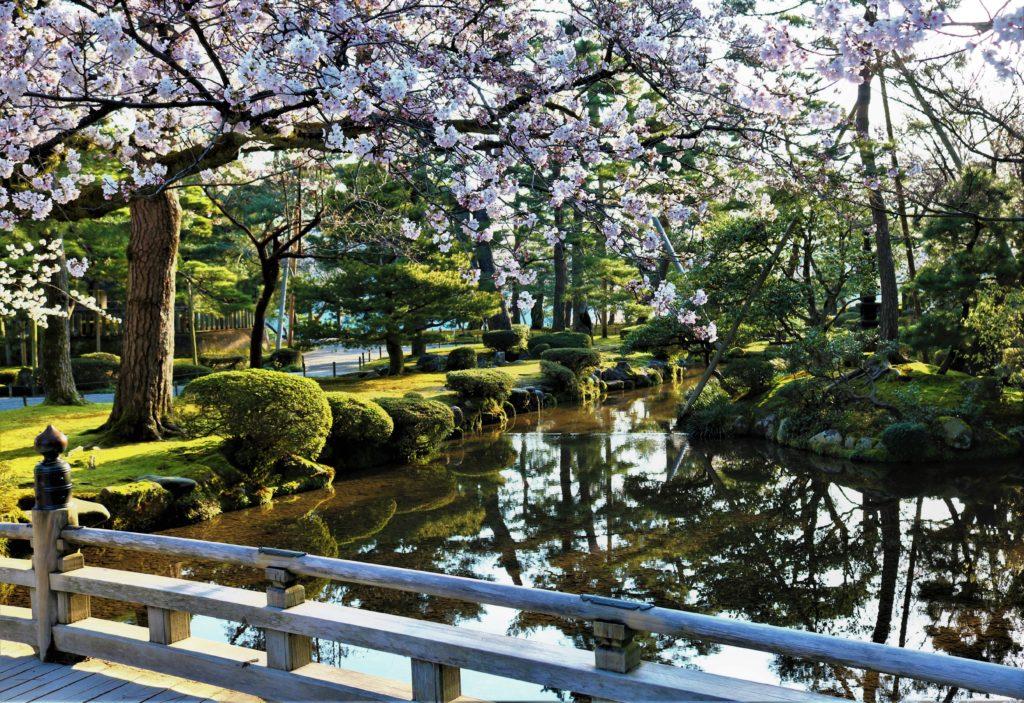 【2020春】兼六園の桜の見頃・開花予想・人気スポット10ヵ所や花見ライトアップ 桜と花見橋02