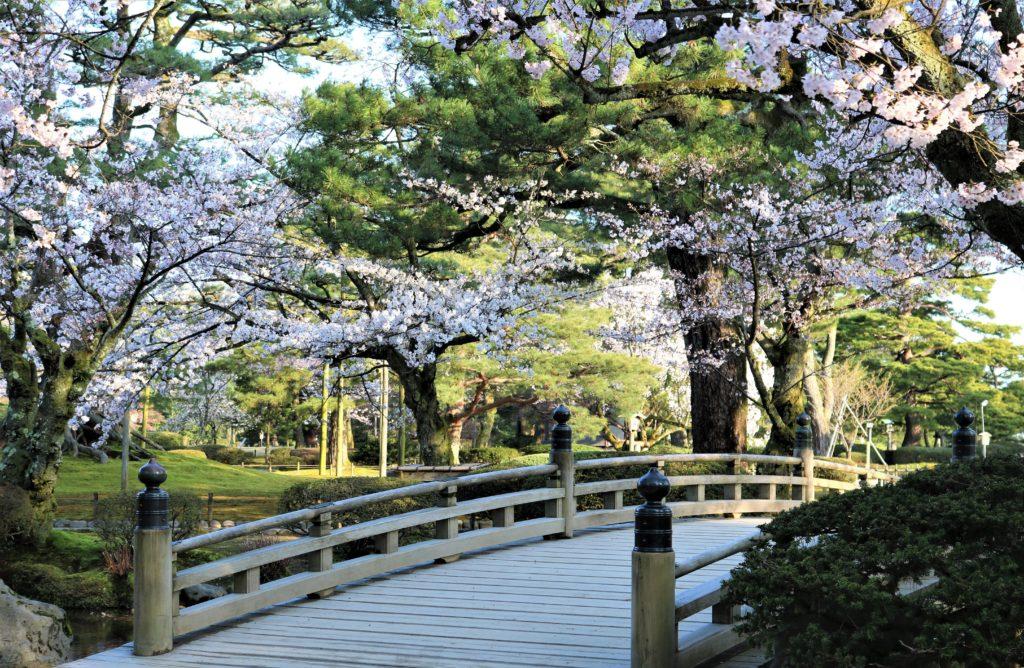 【2020春】兼六園の桜の見頃・開花予想・人気スポット10ヵ所や花見ライトアップ 桜と花見橋01