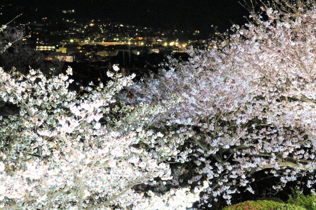 【2020春】兼六園の桜の見頃・開花予想・人気スポット10ヵ所や花見ライトアップ 兼六園眺望台からの眺め02