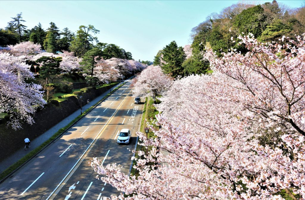 【2020春】兼六園の桜の見頃・開花予想・人気スポット10ヵ所や花見ライトアップ 石川橋からの眺望01