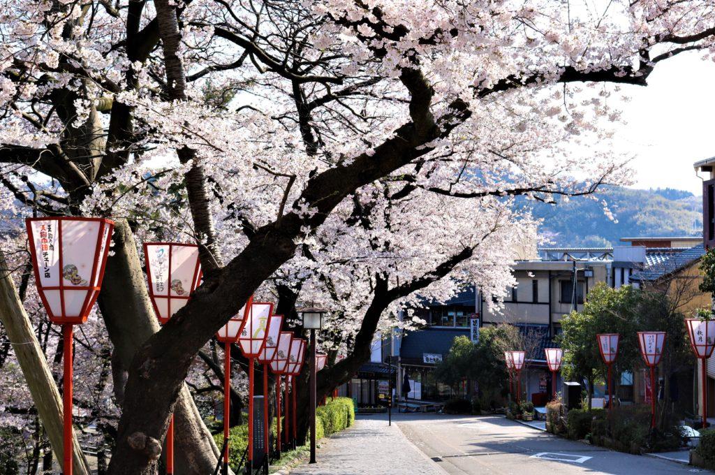 【2020春】兼六園の桜の見頃・開花予想・人気スポット10ヵ所や花見ライトアップ 石川橋周辺01