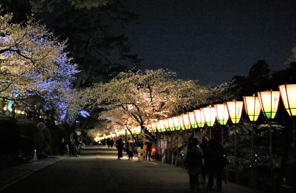 【2020春】兼六園の桜の見頃・開花予想・人気スポット10ヵ所や花見ライトアップ 石川橋周辺02ライトアップ