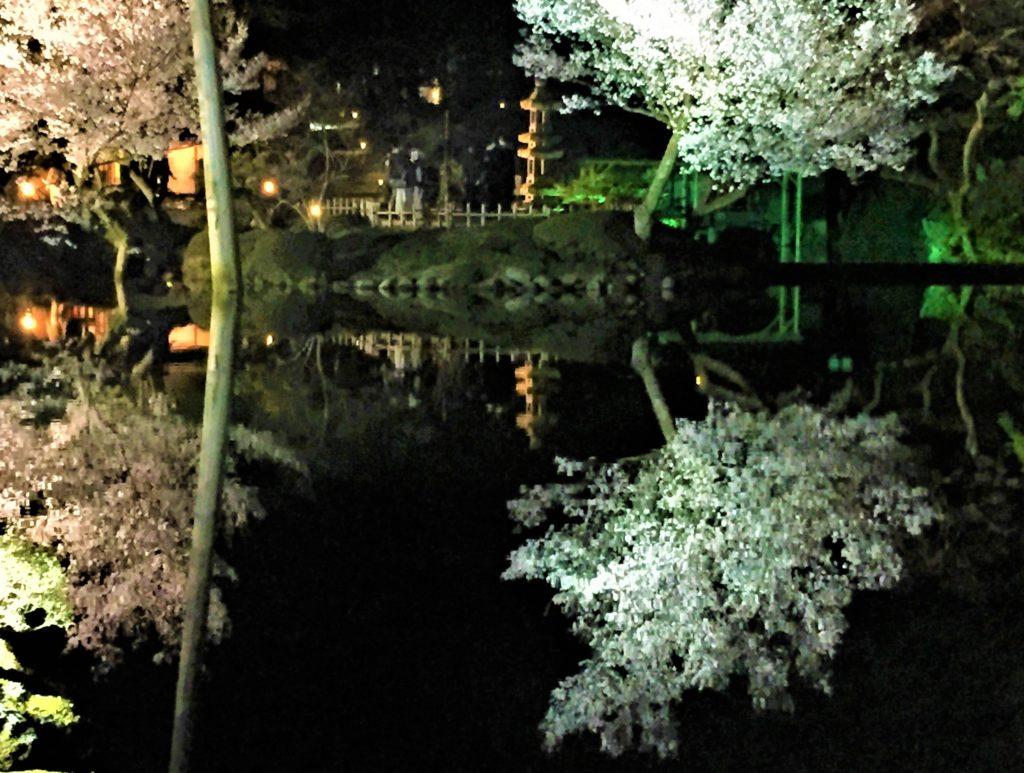 【2020春】兼六園の桜の見頃・開花予想・人気スポット10ヵ所や花見ライトアップ 瓢池 逆さ桜02