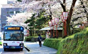 【2020春】兼六園の桜の見頃・開花予想・人気スポット10ヵ所や花見ライトアップ  JRバス