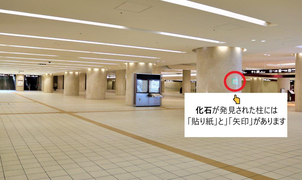 兼六園・金沢城公園など金沢観光には【バス】【自転車】がおすすめ! もてなしドーム地下広場 化石01