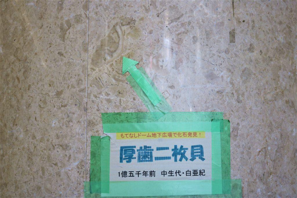 兼六園・金沢城公園など金沢観光には【バス】【自転車】がおすすめ! もてなしドーム地下広場 化石02