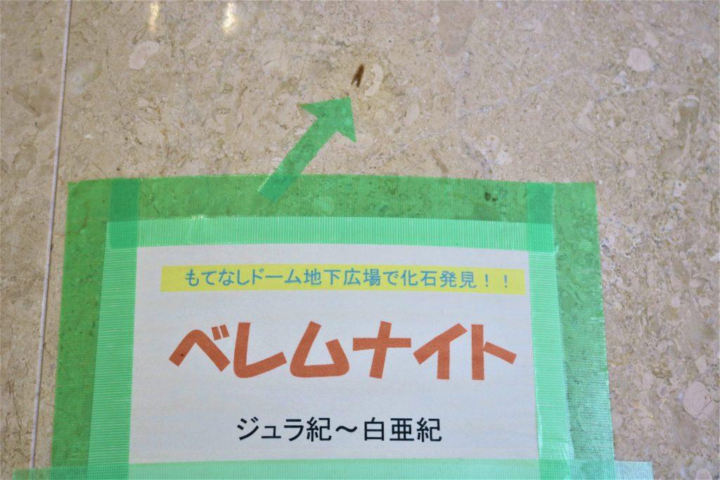 兼六園・金沢城公園など金沢観光には【バス】【自転車】がおすすめ! もてなしドーム地下広場 化石03