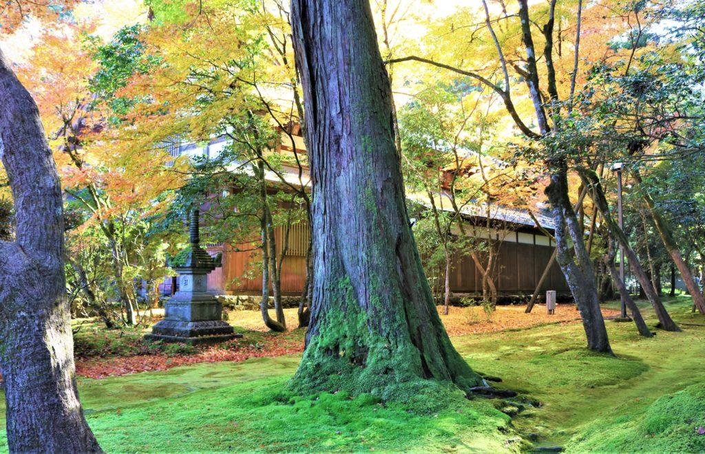 【紅葉】石川・金沢兼六園の見頃・混雑時間・駐車場やライトアップ2021について 那谷寺の苔